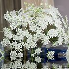 Queen Anne's Lace; Woodside Florist, Whittier, CA USA  by leih2008
