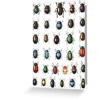 Beetle specimen Greeting Card