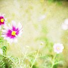 Flowers in my garden by avee