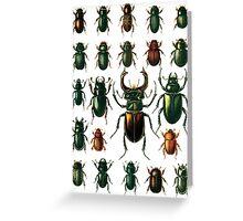 Beetle specimen 2 Greeting Card