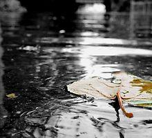 Fallen Leaf by Jessica Liatys