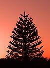 Christmas Tree by Denise Abé