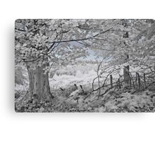 The Sycamore Tree - Infrared Canvas Print