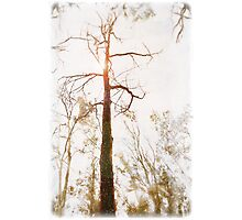 Winter in the Woodlands Photographic Print