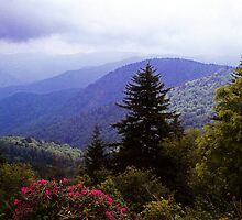RHODODENDRON ALONG THE BLUE RIDGE PARKWAY by Chuck Wickham
