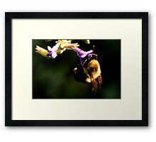 Bumble Bee and Flower Framed Print