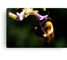 Bumble Bee and Flower Canvas Print