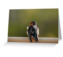 """Welcome Swallow"" Greeting Card"