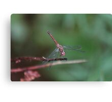 Dragonfly on green Canvas Print