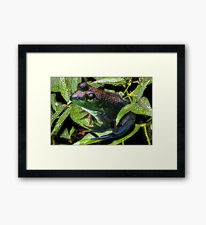 Froggie in his Element Framed Print