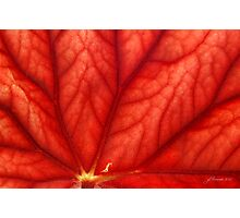 Under Shades of Red Photographic Print