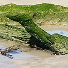 """Nature's """"Green Sea Dragon"""" by Trish Meyer"""