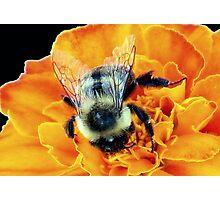 Buzz Off © Photographic Print