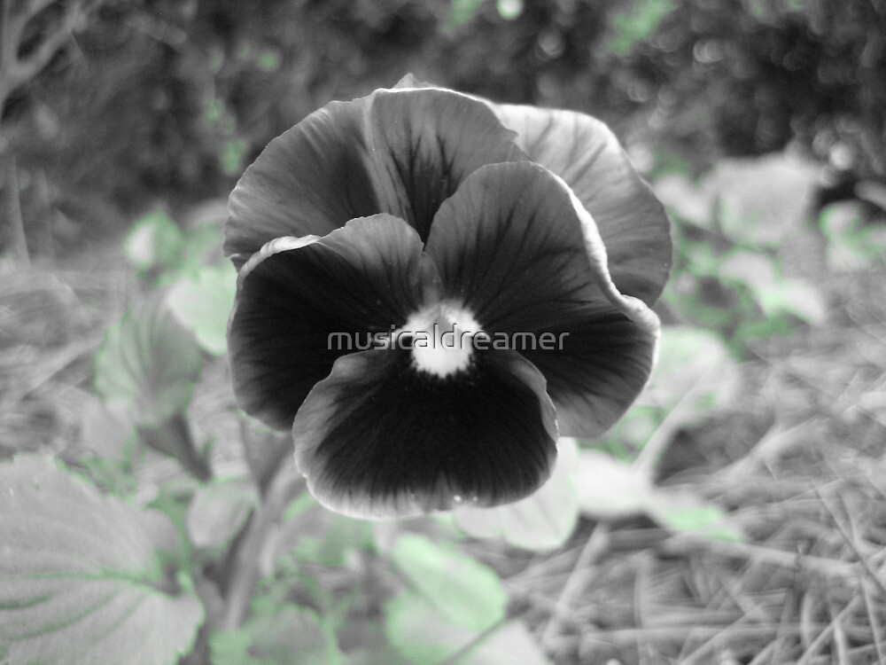 Pansy Pallete by musicaldreamer