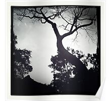 The Old Tree Poster
