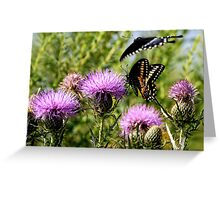 Male Black Swallowtail Butterfly Greeting Card