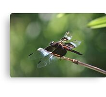 Double-winged dragonfly Canvas Print