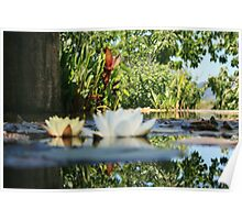 Pond, Napa Valley Poster