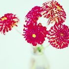 Pom Pom Dahlias by edarlingphoto