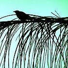 Bird in Silhouette on green by Melania