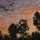 San Diego Dawn by Heather Friedman