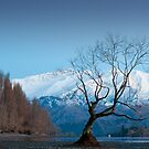 First Spring Dawn, Lake Wanaka, NZ by Neville Jones