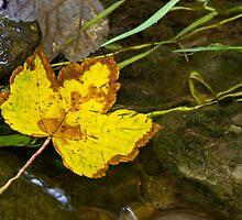 Leaves in the stream 4 by BeardyGit