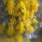 Loaded with Wattle by Lozzar Landscape