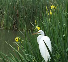 Egret Amid the Reeds by Pegasus796