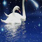Swan by RockyWalley