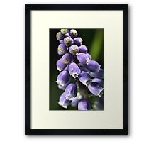 Shine on Spring Framed Print