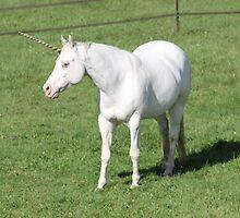 A Real Live Unicorn! by Phreeq