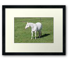 A Real Live Unicorn! Framed Print