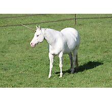 A Real Live Unicorn! Photographic Print
