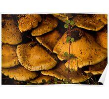 Fungus Amoung-Us Poster