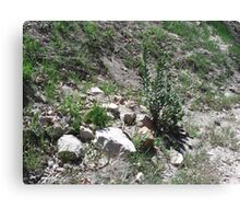 Rocks On The Forest Trail Canvas Print