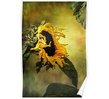 Sunflower, Poster