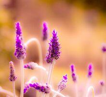 Lavender field close up by Marianne Ellis