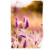 Lavender field close up Poster