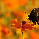 Butterfly Field by Lolabud