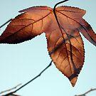 Goodbye Autumn. by RainbowWomanTas