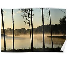 Trees, fog, lake and forest Poster