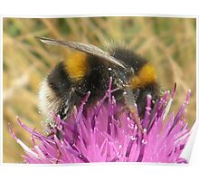 A Scottish Bumble Bee Poster