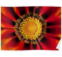 Floral fireworks Poster