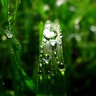 Dew Drop Jewels of Spring by Samantha  Goode