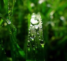 Dew Drop Jewels of Spring by Of Land & Ocean - Samantha Goode