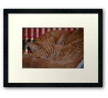 do not disturb - cat sleeping Framed Print