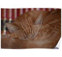 do not disturb - cat sleeping Poster