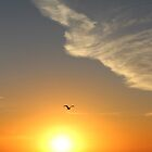 Sunrise, Seagull And A Face In The Sky | Hampton Bays, New York by © Sophie W. Smith