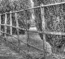 FENCE LINE by RED-RABBIT